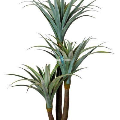 Dracena & Artificial Yucca