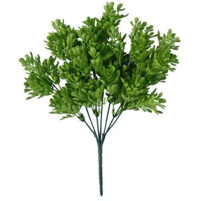 Vivid Green Wide Eucalypts Plant
