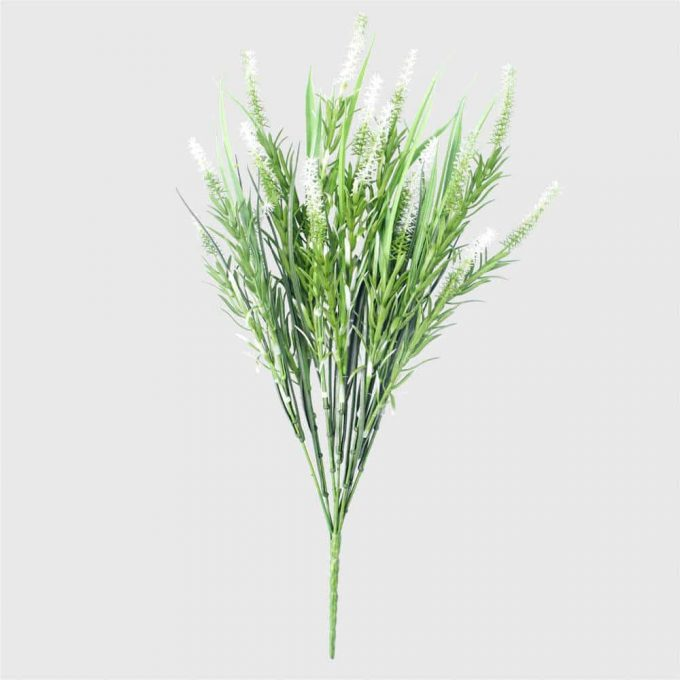 Long Stem White Lavender