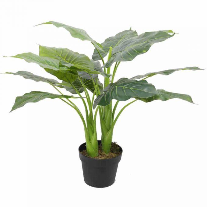fake potted taro plant