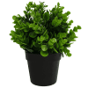 recycled small artificial Peperomia plant