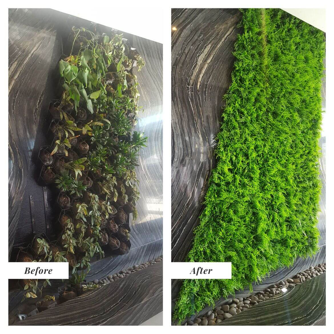 Wall Before And After Transformation With Artificial Plants