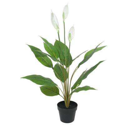 potted calla lily plant