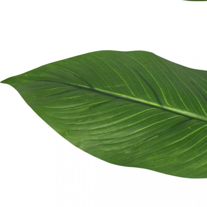 artificial peace lily leaves