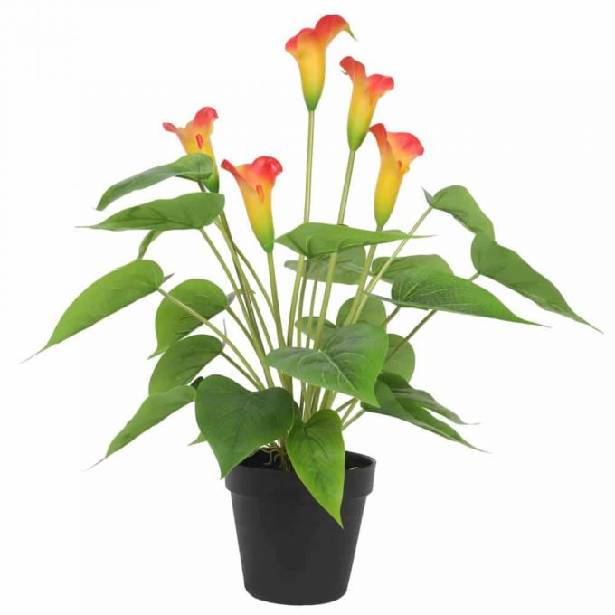 flowering orange fake peace lily plant