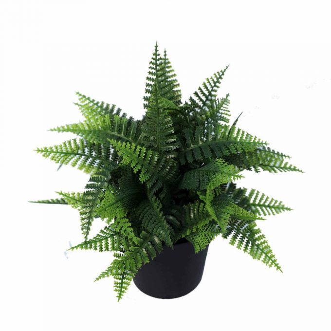 artificial potted fern plant