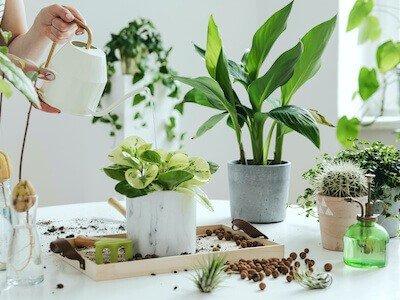 A set of plastic plant pots on a white bench