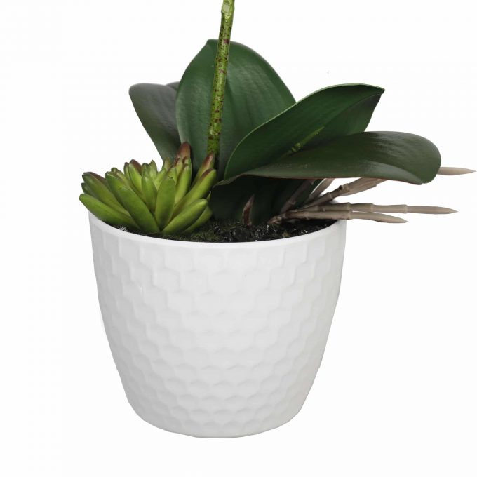 small pot with a white potted orchid