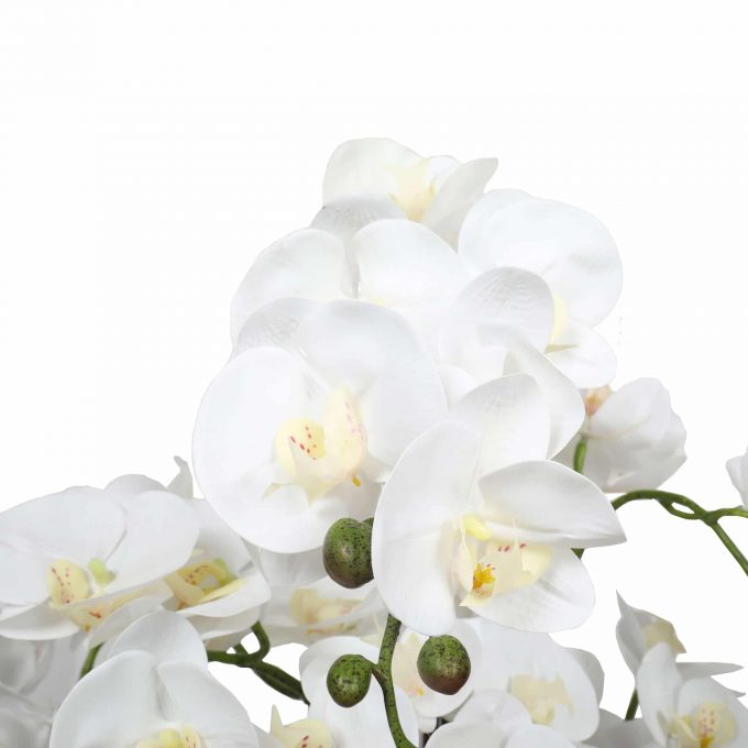 artificial orchid with white flowers