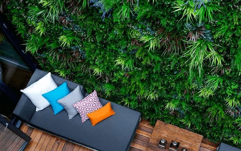 Designer Plants Autumn green wall with colourful chairs by their side