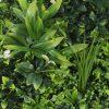 Artificial vertical garden foliage view