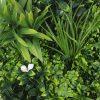 Foliage -White Frame Artificial Vertical Garden Disc