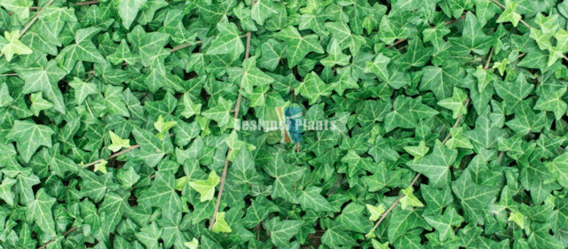 Artificial Ivy garden wall