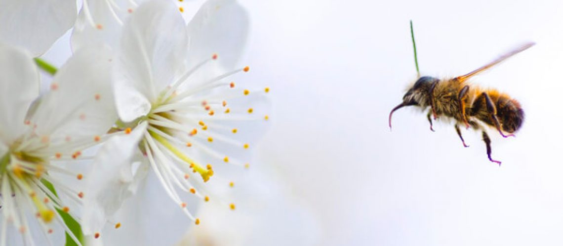 Plants that repel bees and wasps - bee heading to flower