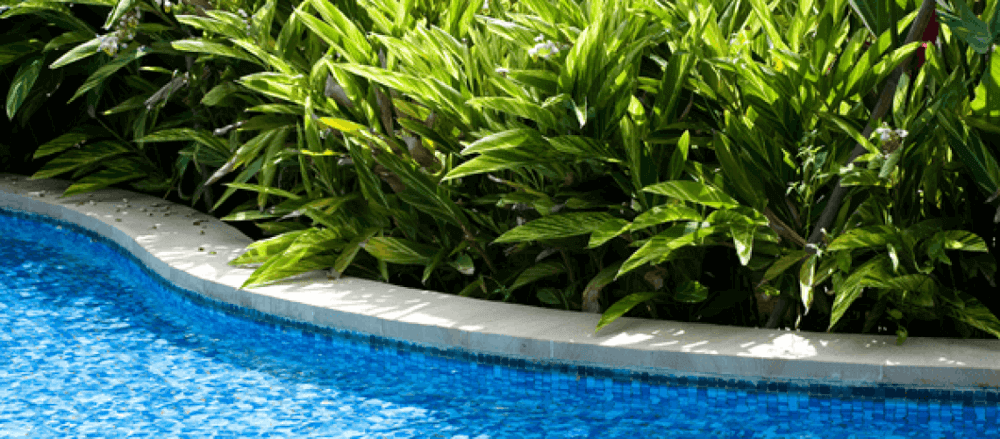 Poolside plants - pools next to the pool in a garden