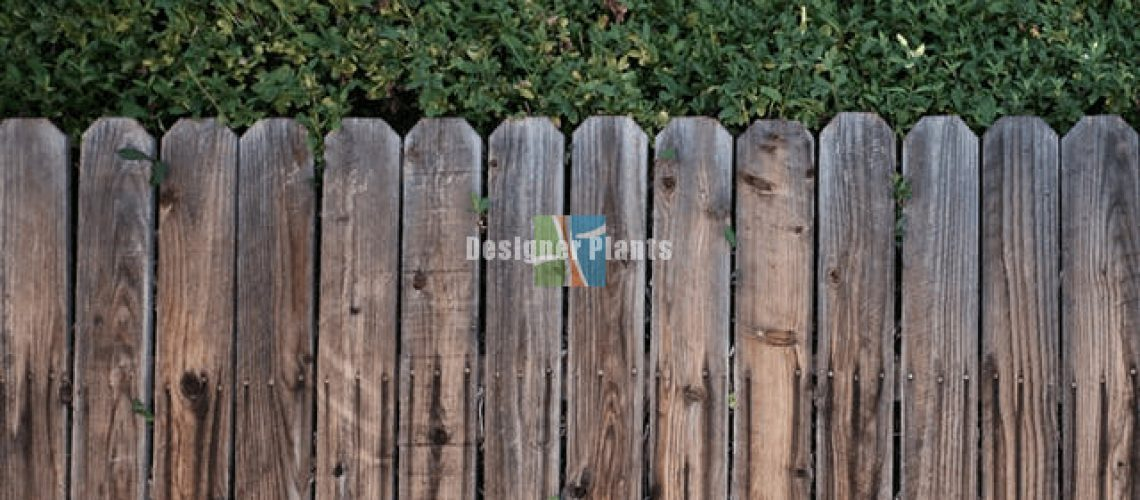 Compare fence options